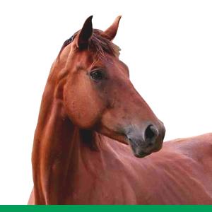 mangimi losasso - Cavalli